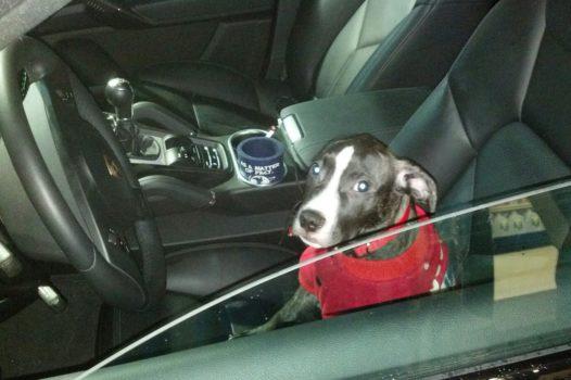 Pet Sitter Job/Pet Sitting/Dog Walker/#1/Fun & Exciting